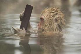 तस्वीरों में देखें जानवर की अजीब हरकतें, देखते ही आ जाएगी हंसी