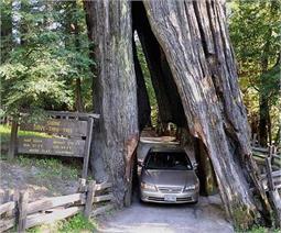 पेड़ के बीच से होकर गुजरती है यह सुरंग, देखें तस्वीरें