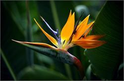 दुनियाभर में मौजूद ये फूल, ले सकते हैं किसी की भी जान!(pics)