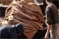 चमड़ा उद्योग के 50 हजार मजदूरों व कर्मचारियों का वेतन रूका, खाने के पड़े लाले