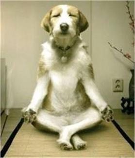 photos: इंसानो से बेहतर YOGA करते है ये जानवर, देखिए और हंसिए