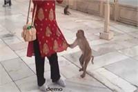 इस बंदर की छेडख़ानी को देखकर मनचले भी शरमा जाएं