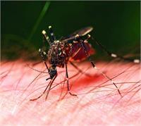 यूपी के जिलों में डेंगू का कहरः 32 नए मामले, मरीजों की संख्या 174 हुई