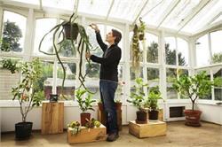 ये 4 पौधों घर में डैकोरेशन के साथ-साथ देंगे स्वास्थ्य फायदा (PICS)