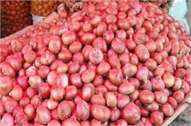 प्याज हुआ 5 पैसे प्रति किलो, बेचने के बजाए खेतों में फेंक रहे किसान