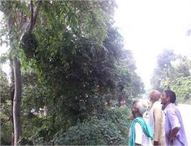 आसमान से नहीं, पेड़ से हो रही हैं बारिश! (Pics)