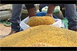 किसानों की फीकी दिवाली, दालों की कीमतें लगातार जमीन पर