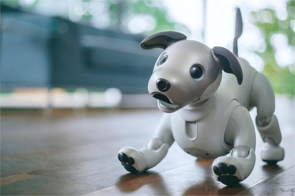 घर पर आपका मन बहलाएगा यह रोबोट डॉग