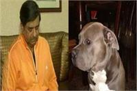 नोएडा से व्यापारी का कुत्ता किडनैप, ढूंढने वाले को मिलेगा 50 हजार का इनाम