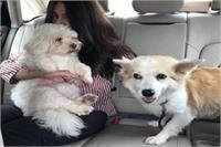 एक बार फिर सुर्खियों में अभिनेत्री रिया सेन, कुत्ता बना वजह