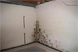 दीवारों की फंगस दूर करने के आसान उपाय