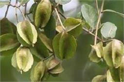हाई ब्लड प्रैशर से लेकर अनिंद्रा का एक इलाज!