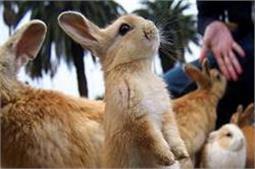 जानवरों से करते हैं प्यार,जरूर करें इन देशों की सैर