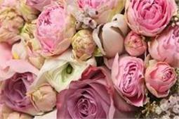 Friendship के हिसाब से ही चुनें गुलाब का रंग