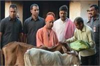 गौशाला पहुंचकर CM योगी ने गायों को खिलाई गुड़-रोटी, कल नहीं जाएंगे अयोध्या