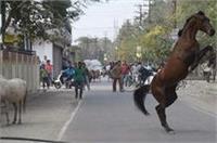 बेलगाम घोड़े ने मचाया उत्पात, अपने आगे-पीछे दौड़ाकर पुलिसवालों के छुड़ाए पसीने