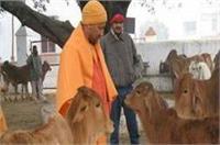 'यूपी में CM योगी का गौ-रक्षा अभियान पूरे देश में बनेगा मिसाल'