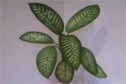 भूलकर भी न लगाएं घर में यह पौधा, जा सकती है जान!