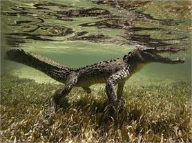 Dangerous Places, जहां देखने को मिलते हैं खतरनाक जानवर