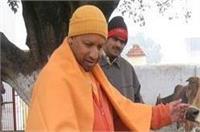 'गौसेवा' योगी की दिनचर्या का हिस्सा, 5 कालिदास मार्ग पर रहेंगी गायें: महाराज
