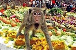 Favorite Tourist Place: जहां बंदरों के लिए मनाया जाता है फैस्टिवल