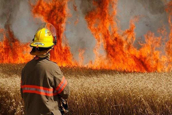 किसानों पर टूटा दुख का पहाड़, 50 बीघा गेहूं की फसल जलकर हुई राख