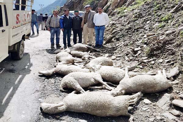 करंट की चपेट में आकर 31 भेड़-बकरियों की मौत