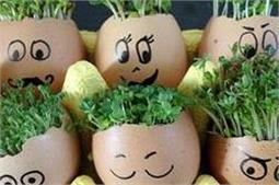 Egg shell plant से सजाएं अपना खूबसूरत घर