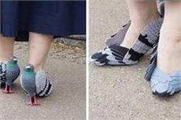 इन Pigeon Shoes को देखकर आप भी कहेंगे Wow So Cute