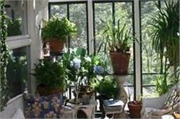 घर में Positive ऊर्जा बनाए रखते हैं ये पौधे