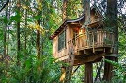 क्या आपने देखा है कभी पेड़ पर बसा Hotel ?