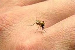 अपनाएं सिर्फ यहीं तरीका, आसपास नहीं फटकेगा एक भी मच्छर