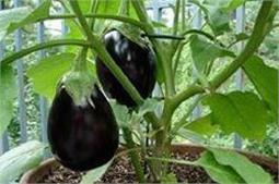 गर्मियों में घर पर ही उगाएं ये सब्जियां