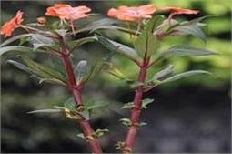 गर्मियों में लगाएं ये फूल, बगीचा जाएगा महक