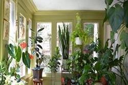 घर में भूलकर भी न लगाएं ये पौधे, आ सकती है मुसीबत
