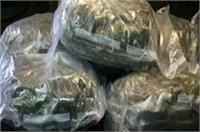 यूपी STF के हाथ लगी बड़ी कामयाबी, 1 करोड़ का गांजा बरामद
