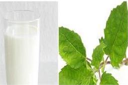 खाली पेट पीएं तुलसी वाला दूध, मिलेंगे बेमिसाल फायदे