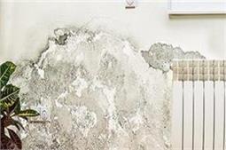 बारिश के दिनों में इस तरह दूर करें दीवारों की सीलन