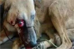 ट्रैफिक मार्शल की हैवानियतः बाजार में कुत्ते को सरेआम पैर से दबाकर उतारा मौत के घाट
