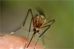 आपके आसपास नहीं फटकेगा डेंगू का मच्छर, अपनाएं ये उपाय