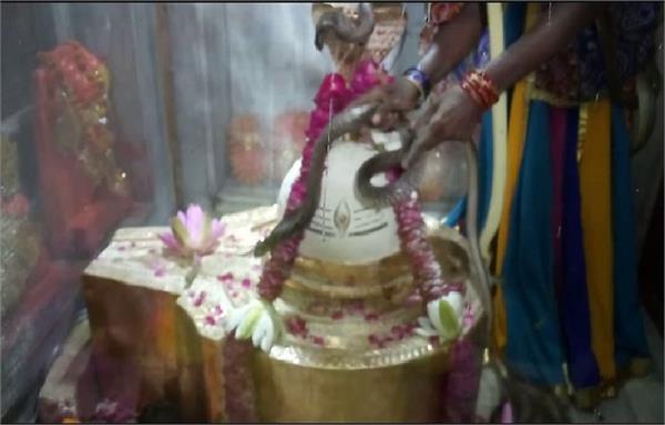 शिव की अनोखी भक्तिः यहां सर्प और बिजखोपड़ों से किया अभिषेक