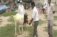 कुर्बानी के पर्व बकरीद पर सजी बकरा मंडी, लाखों की कीमत में बिक रहे बकरे