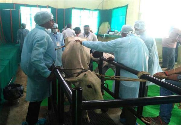 PM ने देखी बछड़े की LIVE सर्जरी, की चिकित्सकों के प्रयासों की सराहना