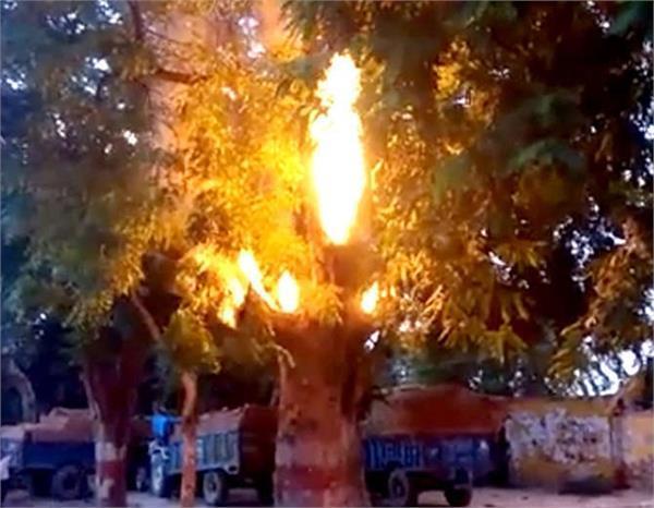 अचानक हरे भरे नीम के पेड़ से निकली आग की लपटें, लोग बोले- पहले कभी नहीं देखा ऐसा