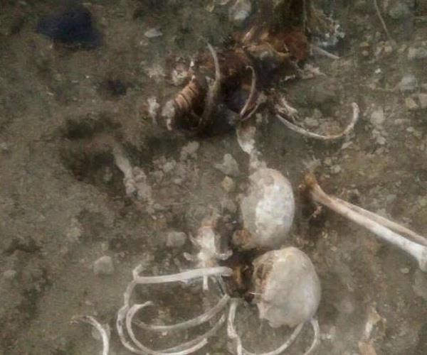 यूपी पुलिस की बड़ी लापरवाहीः 15 दिन तक शव को नोचते रहे कुत्ते, नहीं ली कोई खबर