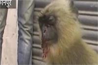देखिए, किस तरह बेजुबान बंदर को युवक ने बेरहमी से पीट-पीटकर किया घायल
