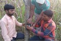 मादा तेंदुए का कहर बरकरार, ग्रामीण अपने घरों में कैद रहने को मजबूर