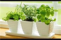 हवा को शुद्ध करने के लिए घर में लगाएं ये नैचुरल प्यूरीफायर पौधें