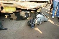 हरदोई: सड़क हादसों में 5 लोगों की मौत