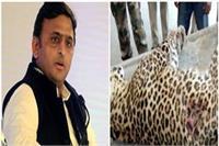 पुलिस द्वारा मारे गए तेंदुए पर बोले अखिलेश, क्या उसके पास कट्टा था और वह गोलियां चला रहा था?